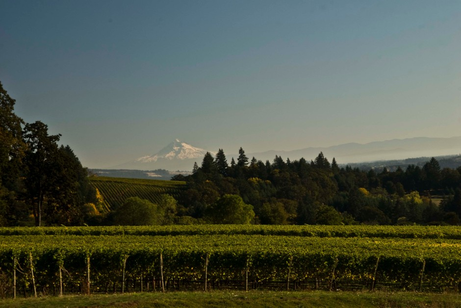 Mount Hood setting the backdrop at Stoller's estate vineyard.