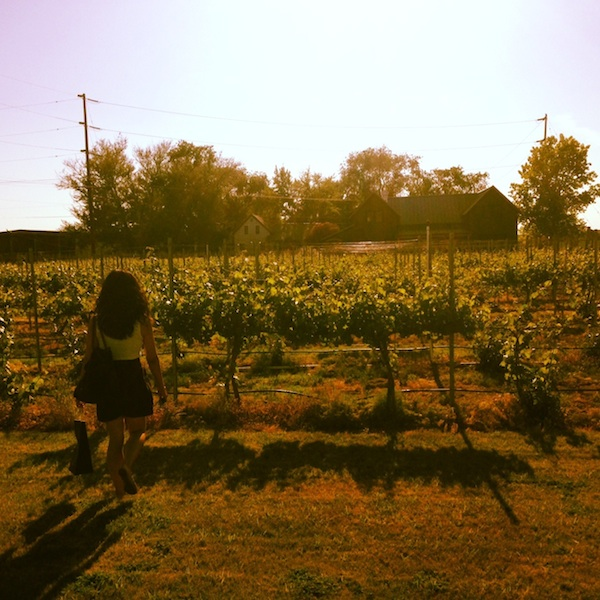 The vineyards at L'Ecole
