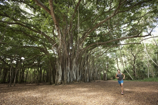THE-BANYAN-TREE