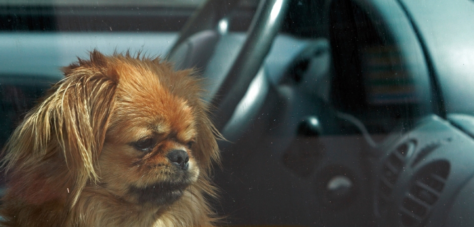 blog_download-and-share-our-hot-weather-infographic-prevent-pets-suffering-hot-cars_main-image