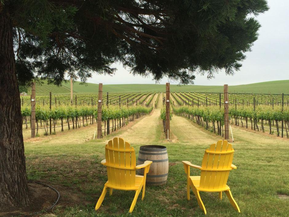 Yellow chairs in vineyard