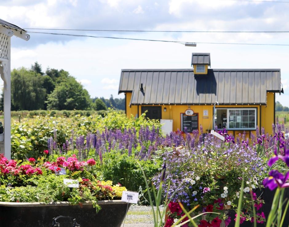 Schuh Farms_Mount Vernon, WA_1